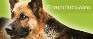 Le forum du BA : une communauté avec plus de 250 000 messages postés !